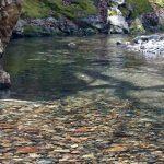 福島県大川水系、栃木県鬼怒川水系釣行フライレポート