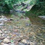 秋田県 仙北市 桧内川水系 フライレポート