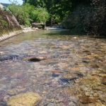 仙北市 桧木内川水系フライレポート