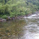 魚野川水系釣行 フライレポート