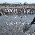 2020年夏・日本海、新潟・富山の天然鮎遡上河川